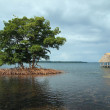 Mangrove and palapa — Stock Photo
