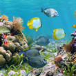 Stock Photo: Panoramic reef
