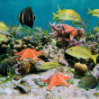 Sealife in a coral reef — Stock Photo