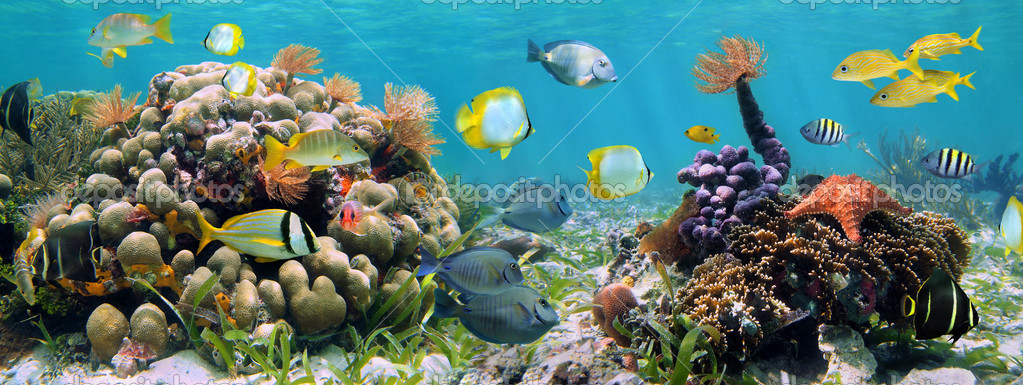 Underwater panorama in a coral reef with colorful sealife — Stock Photo #9416167