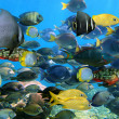 School of fish — Stock Photo