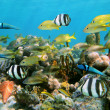 Corals and fish — Stock Photo