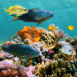 Multicolored underwater sealife — Stock Photo