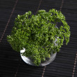 Parsley clump — Stock Photo #8687596