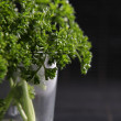 Parsley clump — Stock Photo