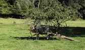 Mucca al riparo sotto un albero — Foto Stock