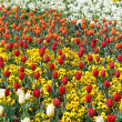Flowerbed — Stock Photo #10242460