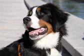 Perro feliz — Foto de Stock