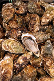 Fresh Oyster — Stock Photo