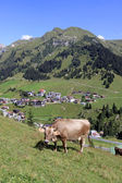 Cow at the Alps — Stock Photo