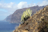 Los Gigantes — Photo