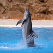 Dolphin - Stockfoto