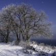Snow-covered trees on the background of the sea. — Stockfoto