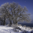 Snow-covered trees on the background of the sea. — Стоковая фотография