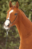 Don mare — Stock Photo