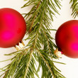 Bauble fir — Foto Stock