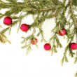 Stock Photo: Bauble fir