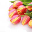 Tulip Easter - Stock Photo
