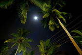 Beautiful palm trees illuminated by the moon — Stock Photo