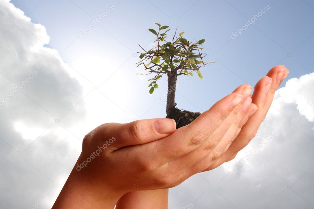 Two hands holding bonsai tree against a blue cloudy sky  Stock Photo #8407211
