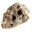 Stock Photo: Stone formed by common piddocks