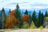 Autumn mountain forest — Stockfoto