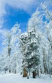 Zimní horský les — Stock fotografie