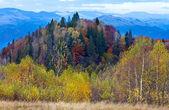 秋の山の森林 — ストック写真