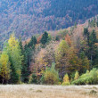 Autumn mountain view with - Stock Photo