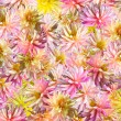 Flowers background — Stock Photo #7986862