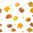 Autumn leafs — Stock Photo #7986974