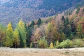 Autumn mountain view with — Stock Photo