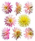 Flowers set — Stock Photo