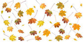 Autumn leafs — Stockfoto