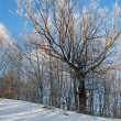 Stock Photo: Rime tree