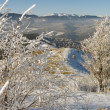 Stock Photo: Winter mountainside (3)
