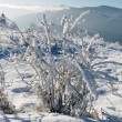 Winter landscape (8) — Stock Photo