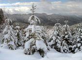 Winter landscape (6) — Foto de Stock