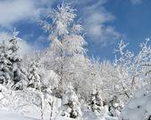 Sparkling snow (1) — Foto de Stock