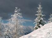 Začátek sněžení — Stock fotografie