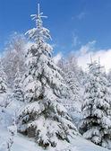 Paisaje de invierno 1 — Foto de Stock