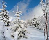 Sparkling snow (2) — Stock Photo
