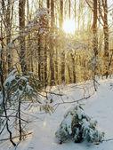Winter sunrise (1) — Stock Photo