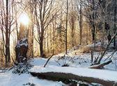 Winter sunrise (2) — Stock Photo