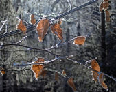 Winter forest (2) — Stock Photo