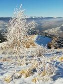 Zboczu góry zimą (1) — Zdjęcie stockowe