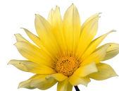 Yellow flower 1 — Stock Photo