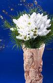 Snödroppe blommor bukett — Stockfoto