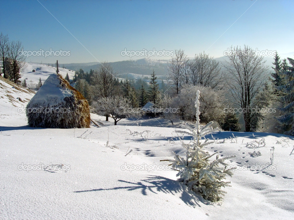 Winter calm landscape with small bright rime fir-tree on a forefront and small farmstead on the mountainside behind — Stock Photo #7994770