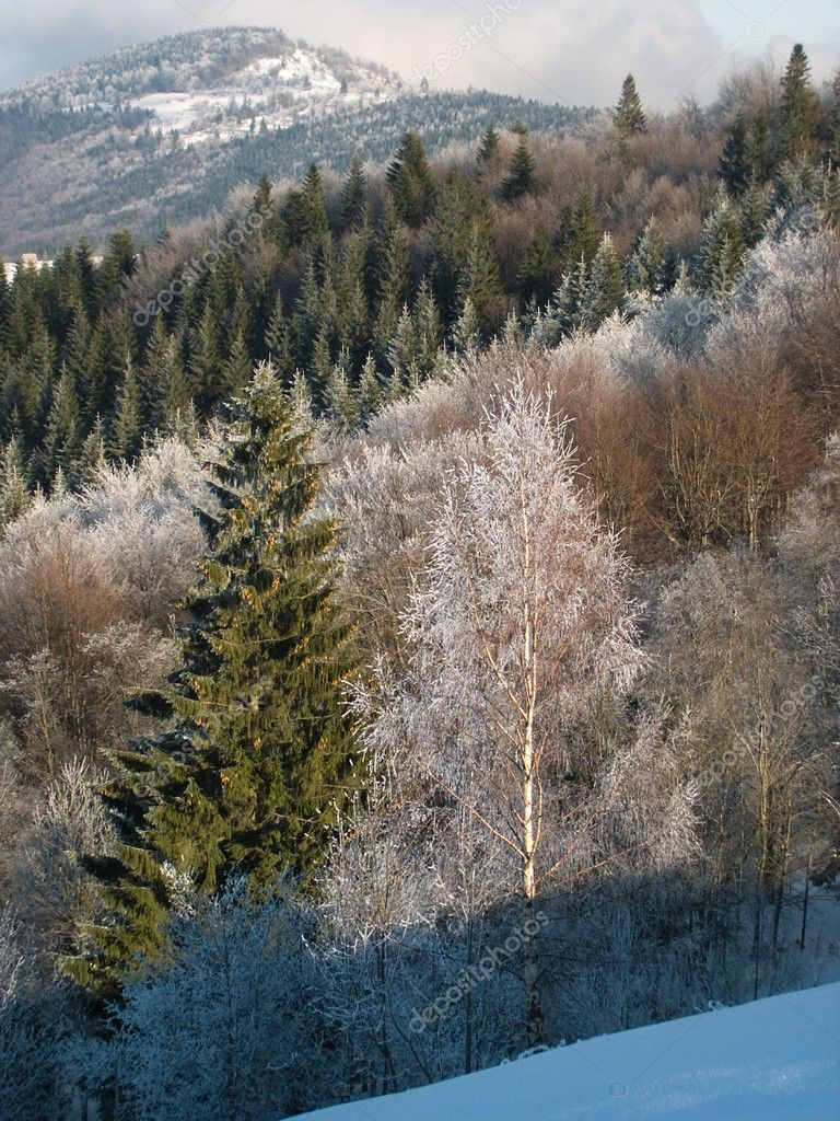 Winter mountain landscape with bright rime trees on a forefront and beech and fir rime forest behind (vertical) — Stock Photo #7994777